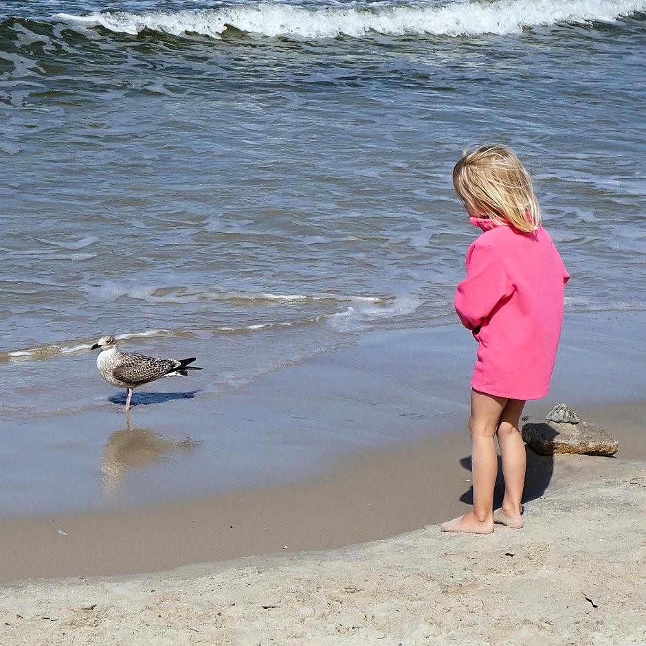 Kuvassa lokki kahlaa rantavedessä ja pieni lapsi seuraa kiinnostuneena rannalta.