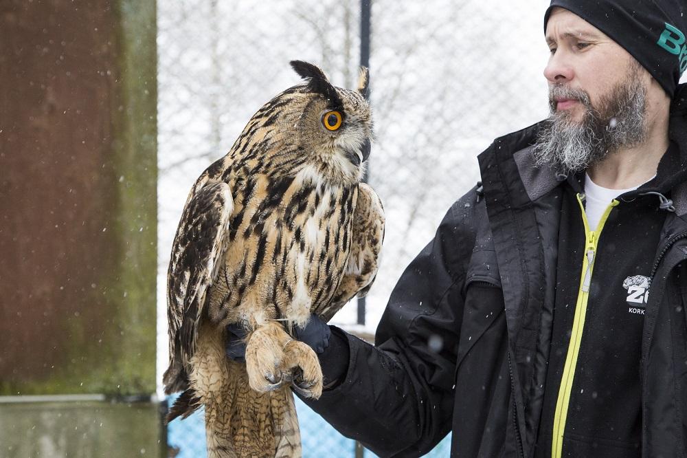 Ville Vepsäläinen pitää pöllöä kädellään.