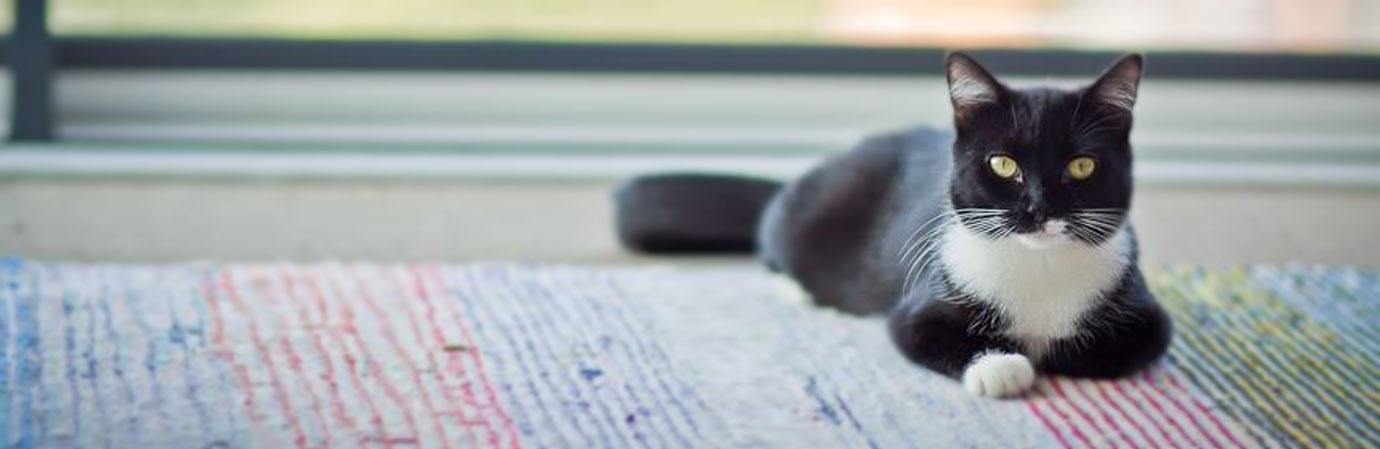 Mustavalkoinen kissa makoilee värikkäällä räsymatolla ja katsoo kameraan.
