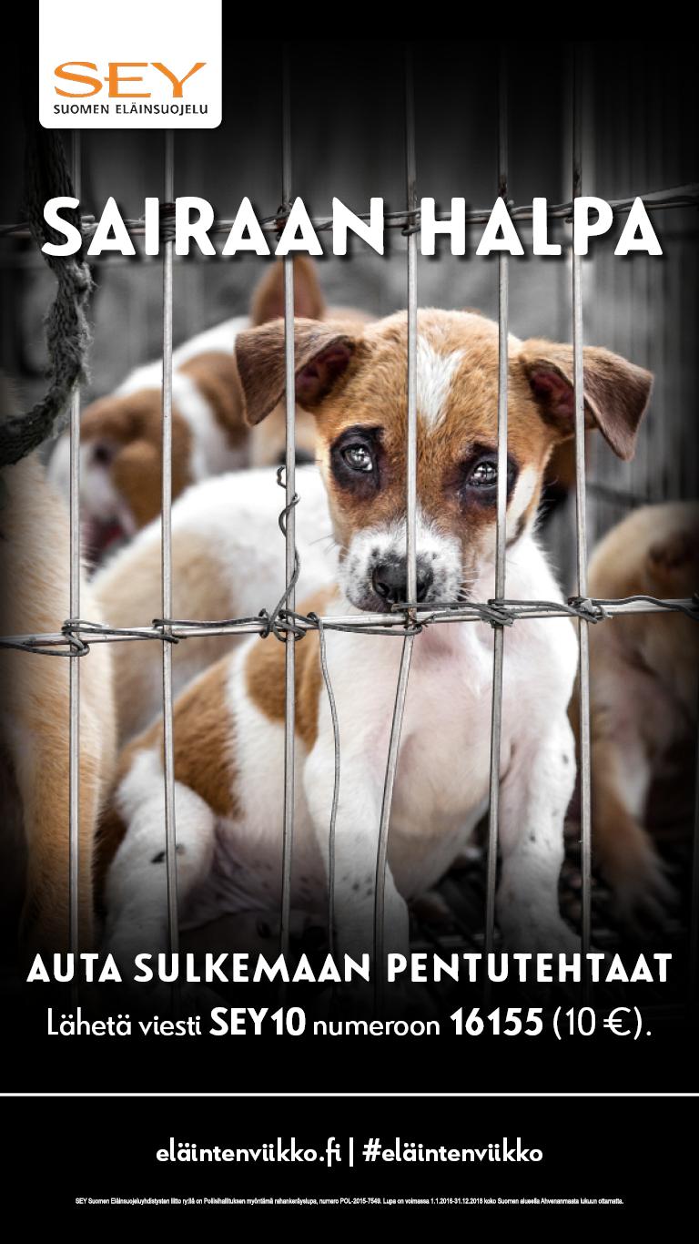 Tummataustainen kuva useasta pienessä häkissä olevasta koiranpennusta, joista yksi luppakorvainen ruskeavalkoinen pentu katsoo kaltereiden välistä suoraan kameraan.