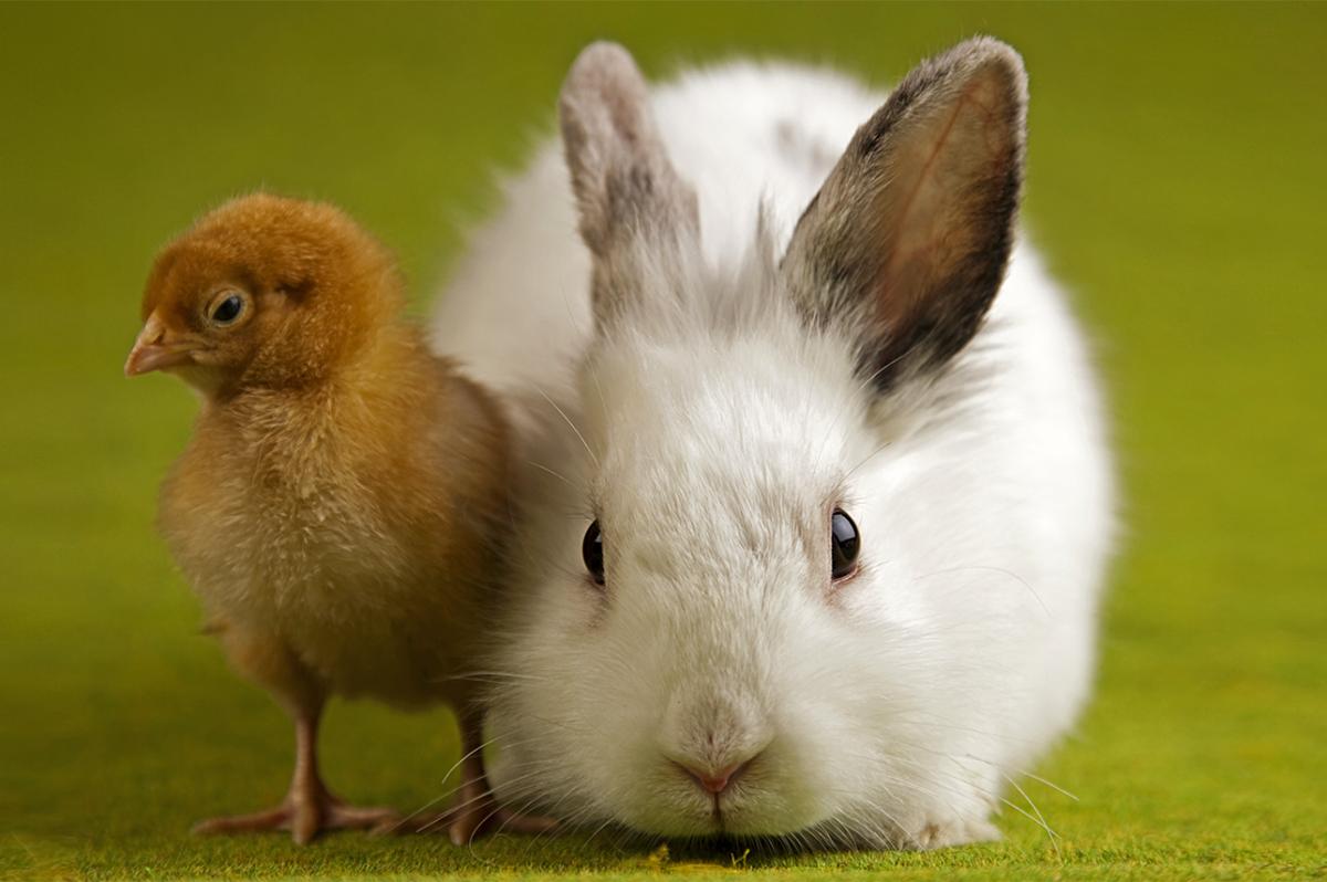 Keltavihreällä taustalla vaalea kani sekä keltaruskea tipu rinnakkain. Eläinten viikkoa vietetään joka vuosi sadoissa kouluissa ympäri Suomen.